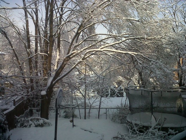 My daughter's backyard.