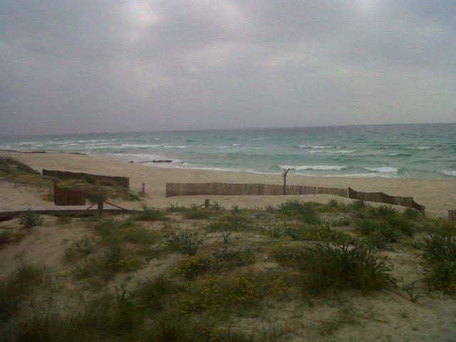 Wind Swept Beaches !
