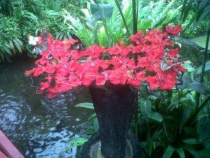 Bufferfly Garden