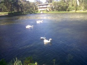 Pond on coffee plantation!