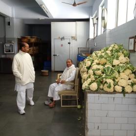 Guarding the Cauliflower!!