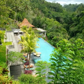 Beautiful resort called Jungle Fish in the Jungle!