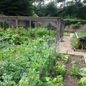 And Vegetable garden at Briony's