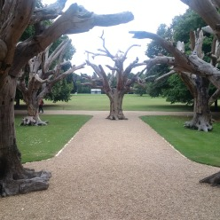 AI WEIWEI art exhibit, Cubes and Trees, Downing College – Cambridge