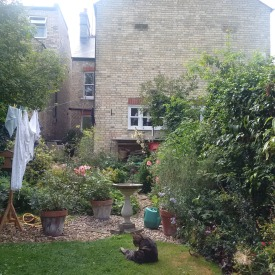 Cat, laundry, garden of where I live!