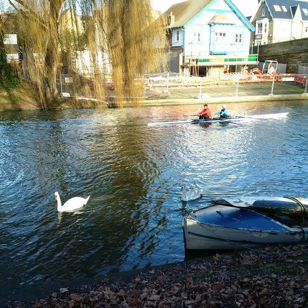 sun-shining-swan-and-rowers