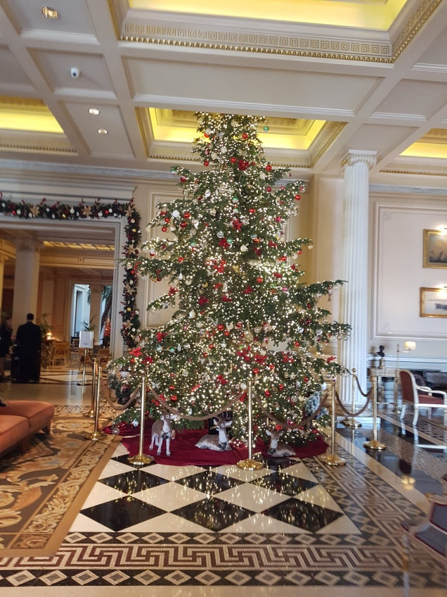 Beautiful tree at 5 star hotel in Athens